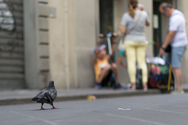 On Via Ricasoli accross from the Galleria dell'Accademia in Florence watching the rat with wings