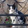 Bagnoregio_Cat-1