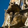 Title: Horse<br /> Date: October 2011<br /> Venice