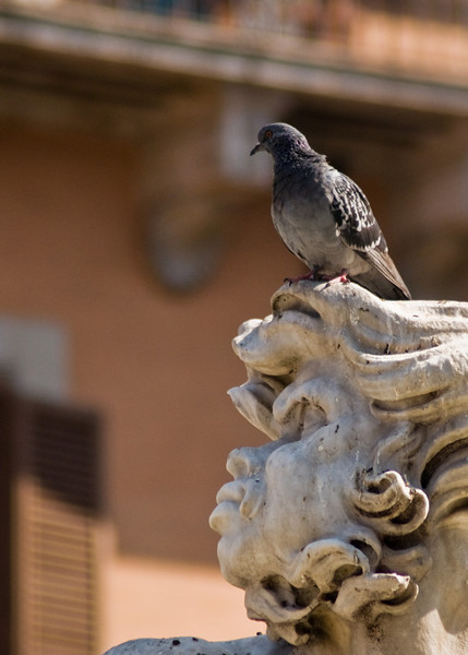 Title: Little Annoyances<br /> Date: October 2011<br /> A statue in Piazza Navona in Rome.