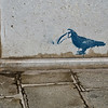 Title: Doctor Bird<br /> Date: October 2011<br /> Venice