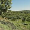 Fields near Terra Bianca Winery