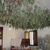 Grapes Drying (Fratticciola)
