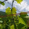 Italy 2009 Flora-8904