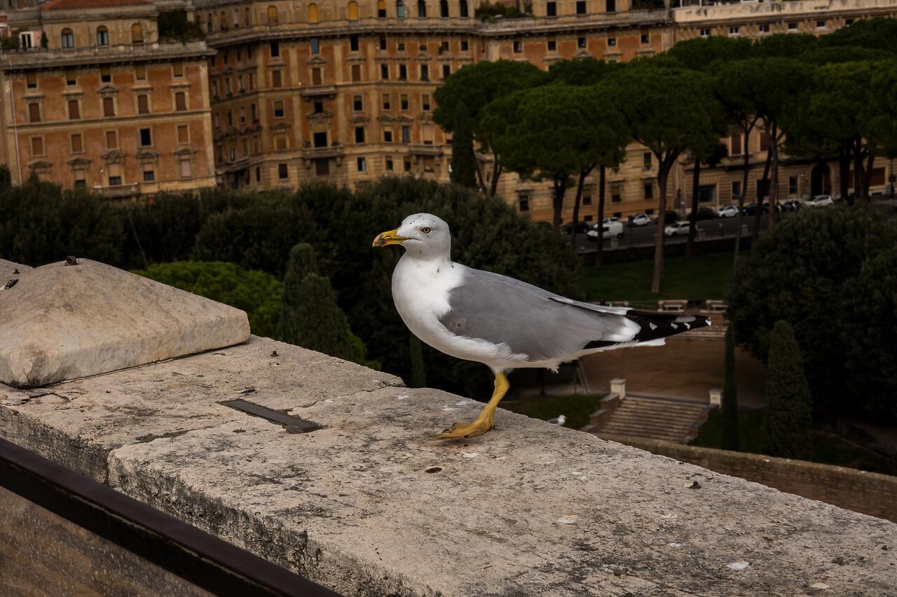 Rome 2015-132