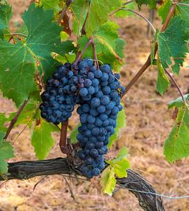 Bagno Vignioni_Vineyards-2