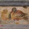 Unknown, Mosaic ducks
