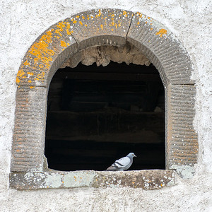 A very old window is home for a pigeon.