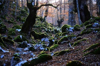 National Park of Abruzzo, Lazio and Molise