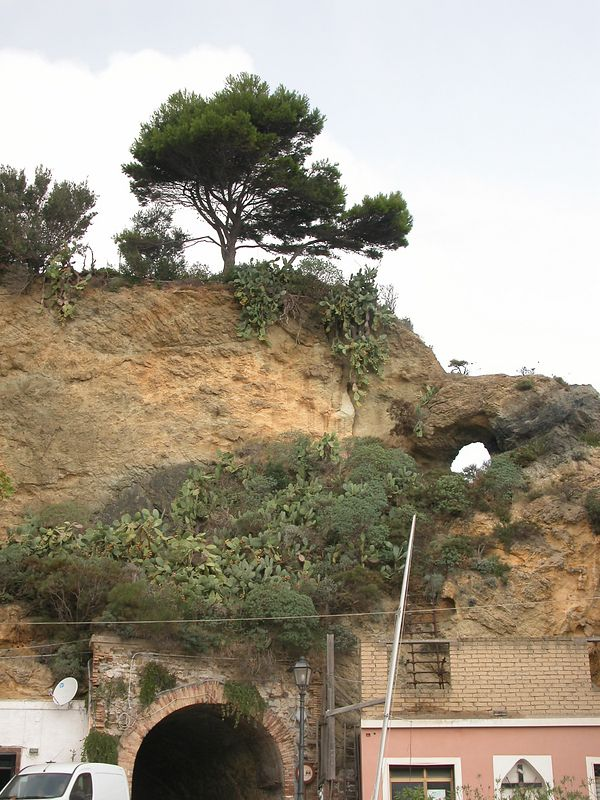 Ponza, Italy<br /> Tree on Clif 2