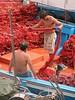 Ponza, Italy<br /> Fisherman preparing the net