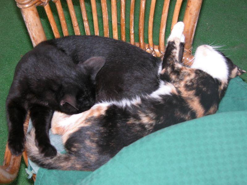 Ponza, Italy<br /> Cats Sleeping