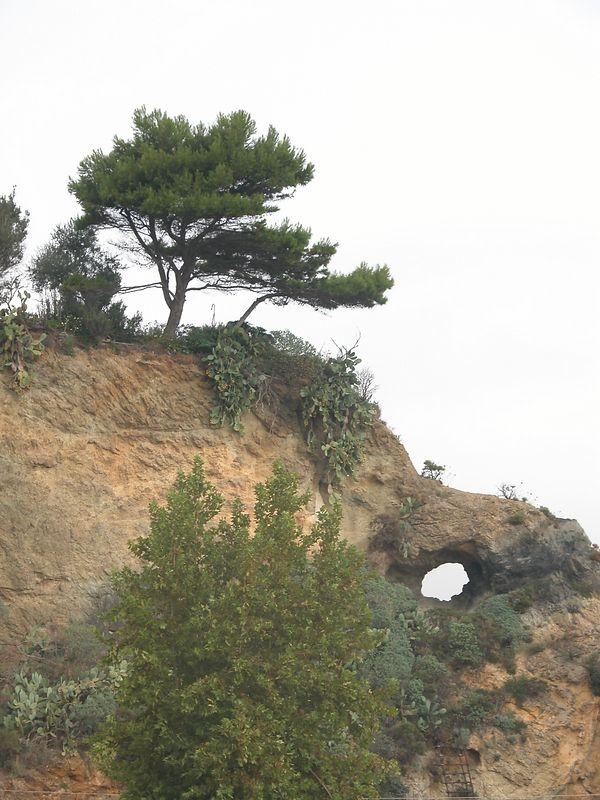 Ponza, Italy<br /> Tree on clif