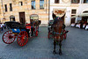 Horses and Carriages
