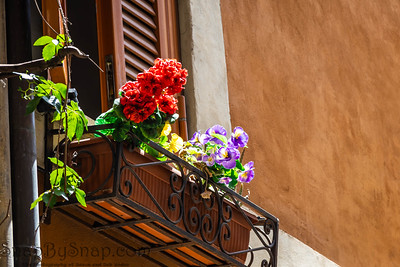 Bright flowers lit up by the summer sun in a flower box outside of a home in the Trastevre neighborhood in Rome