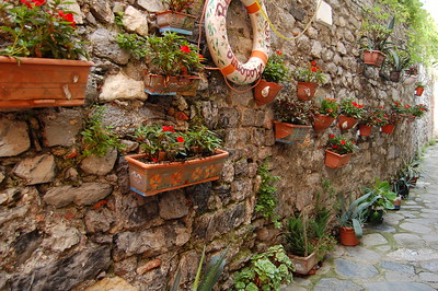 Flowers hanging in Portovenere