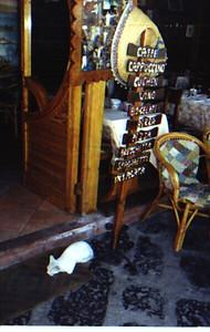 ischia cat