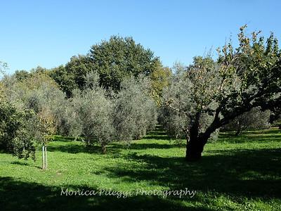 Tuscany October 2017-2162