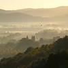 dawn mist - one bird