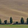More Tuscan trees