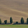 More Tuscan trees