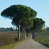 On the road to San Rocco a Pilli