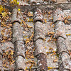 An autumnal roof
