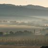 dawn mist - many birds