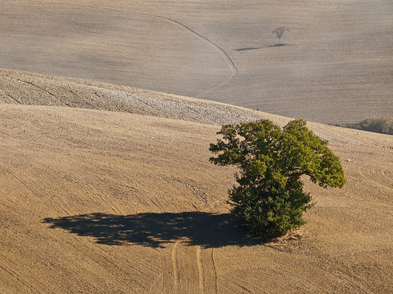 Two trees!!! and an artisticly minded farmer!