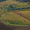 Autumnal vines  - the valley to the south of San Gimignano