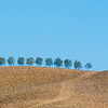 Tuscan Trees - the farmers really make the effort to make the effect.