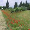 Somewhere between Siena and Volterra