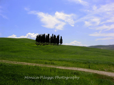 These Cypress  trees have been photographed thousands of times. They are located between Pienza and Montalcino. Here's a web site on the trees: http://www.slowtrav.com/italy/tuscany/cypress_roads.htm and how to find them.