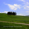 "These Cypress  trees have been photographed thousands of times. They are located between Pienza and Montalcino. Here's a web site on the trees: <a href=""http://www.slowtrav.com/italy/tuscany/cypress_roads.htm"">http://www.slowtrav.com/italy/tuscany/cypress_roads.htm</a> and how to find them."