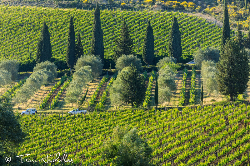 Classic Tuscany - vineyards, olive groves and cypress trees