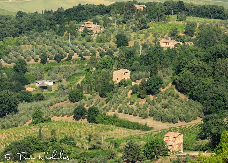 Small farms surrounding Montalcino
