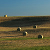 Hay bales in the landscape