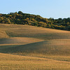 Almost time for reaping on a Tuscan farm