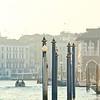 Pilings in Venice