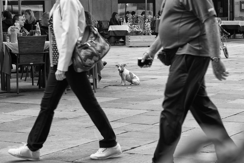 Waiting dog, Verano, Italy