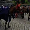 Horse-ear warmers