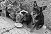 Beggars, Verona, Italy