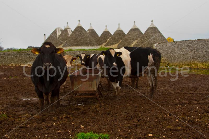 Trulli farm