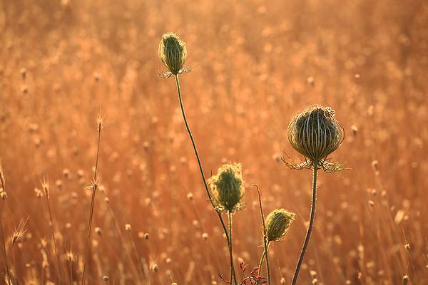 Fields near Perugas, Sardinia