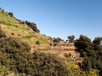 Terraces, Monterosso al Mare, Cinque Terre