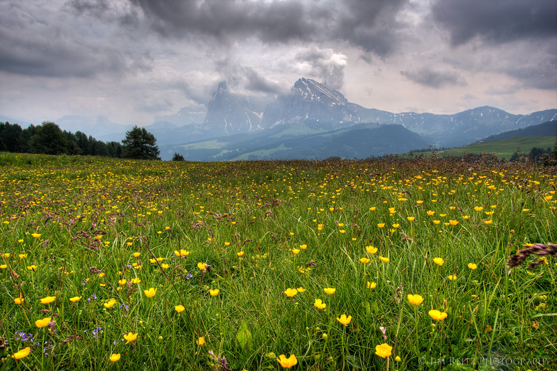 Wildflowers in the Alpi di Suisi.