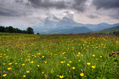 Wildflowers in the Alpi di Suisi.