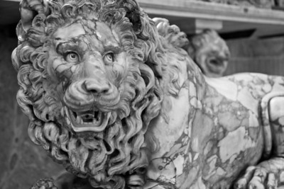Lion The Animal Room Vatican Museum Vatican City, Italy