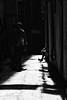 The alley, Genoa