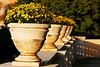 Flower Vases, Roma